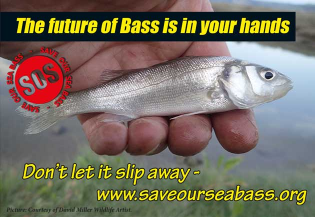 The future of bass