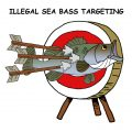 Another Cornwall IFCA Failure: Illegal Sea Bass Targetting