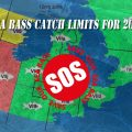 Sea Bass Catch Limits for 2022